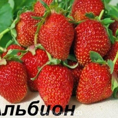 садовые саженцы город владимир