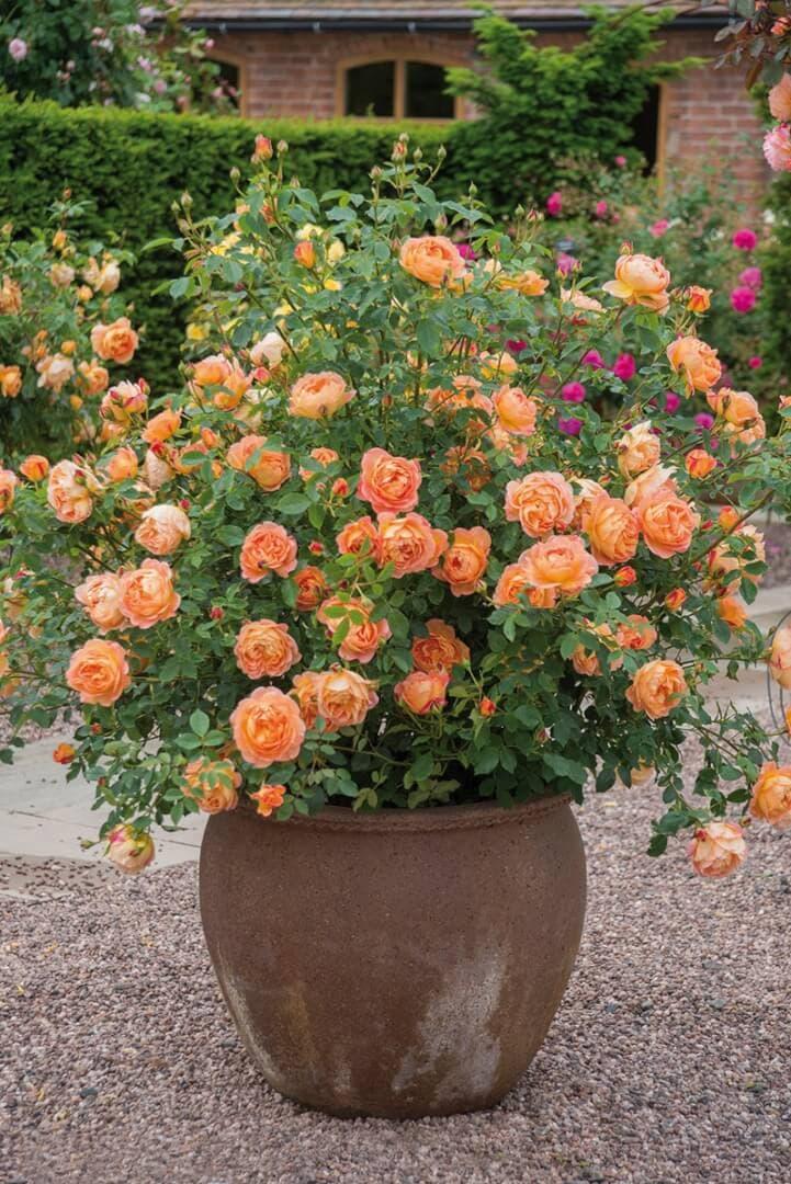Контейнер с розами