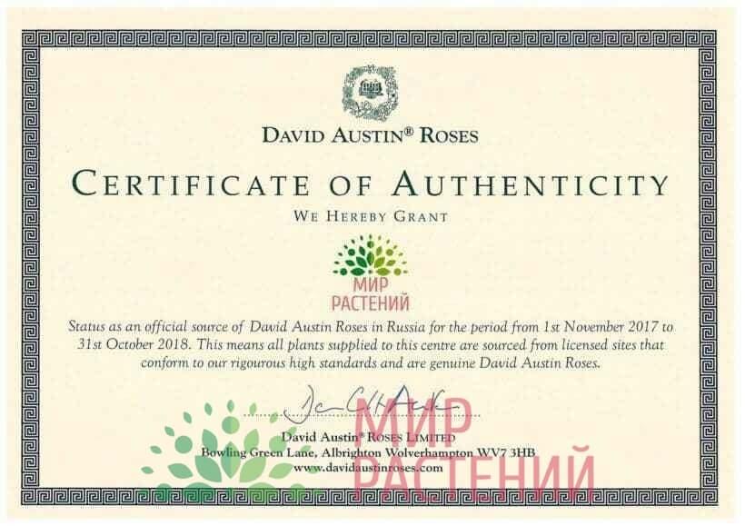 Сертификат David Austin