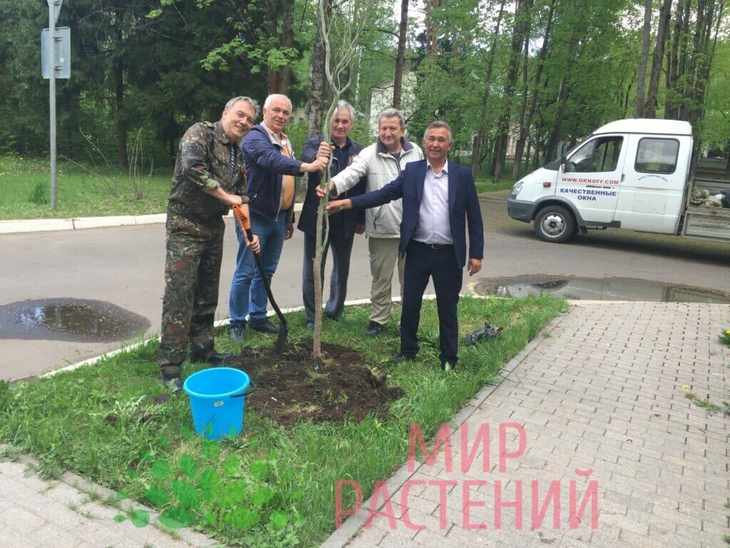 Наши деревья на Аллее Космонавтов-3