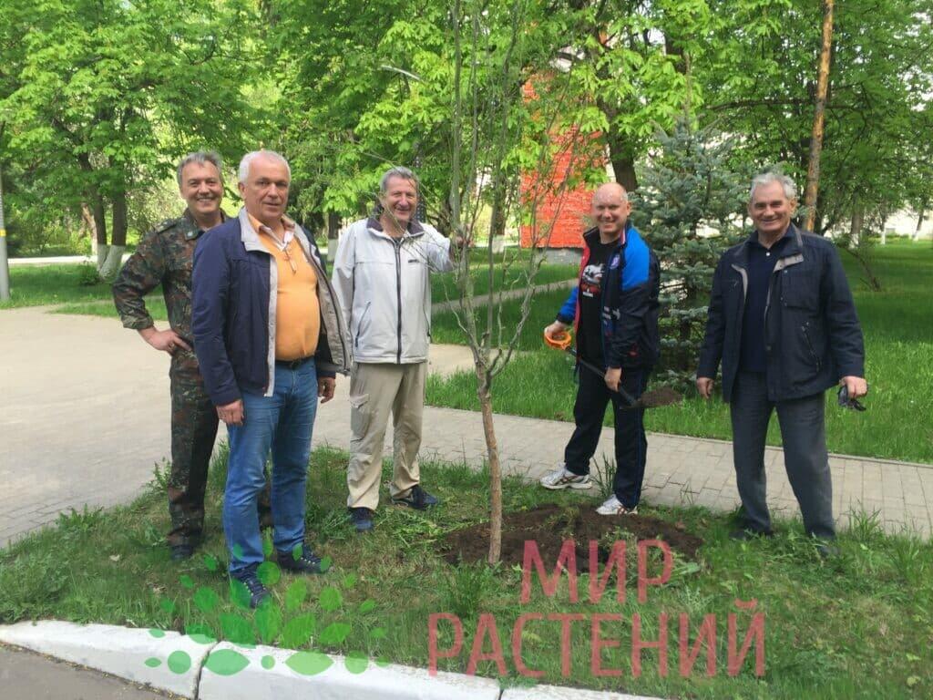 Наши деревья на Аллее Космонавтов-5