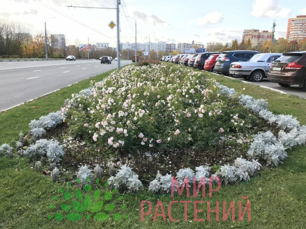 Поставка саженцев для Администрации гор Владимир-4