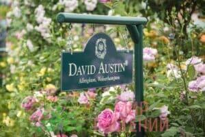 david austin roses logo3