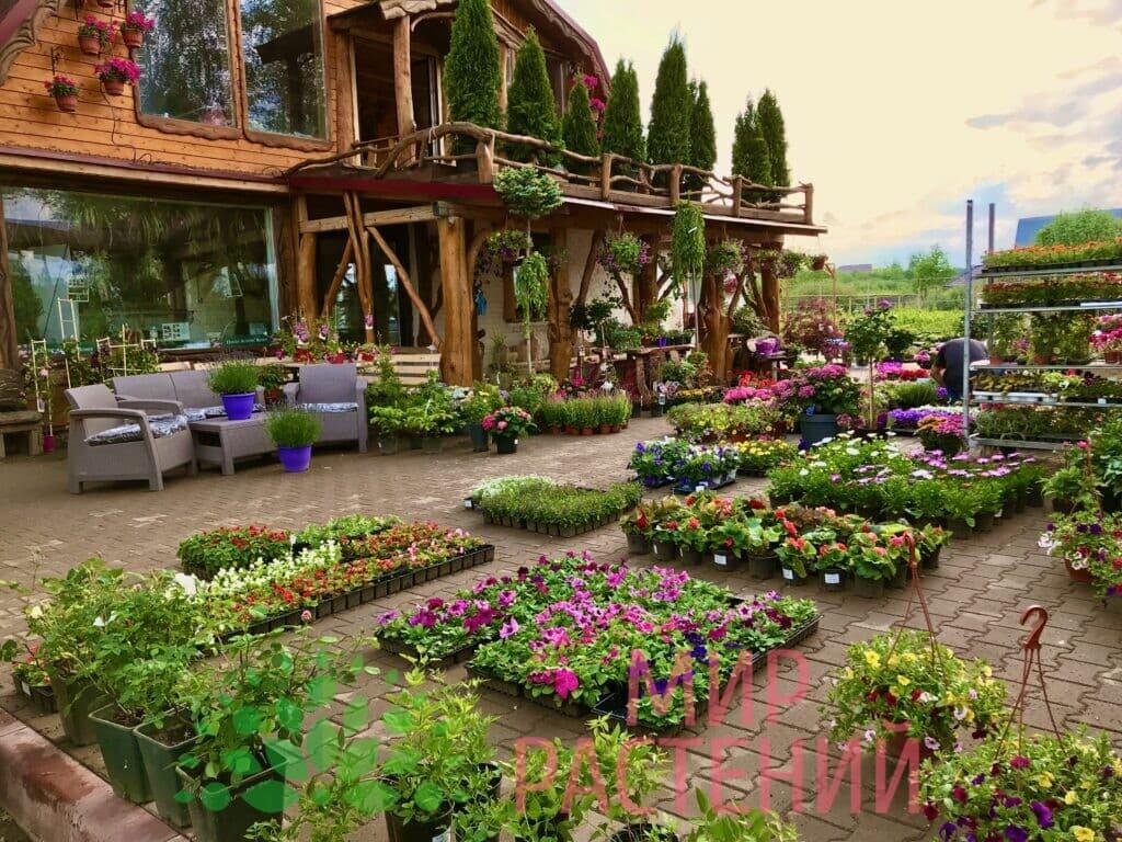Садовый центр Мир Растений mir-rast.ru