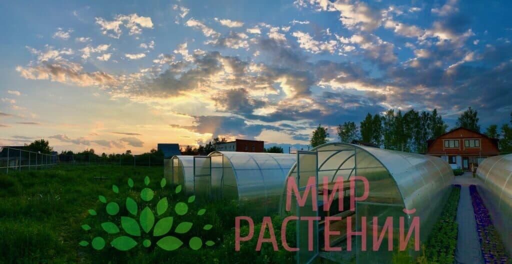 Собственное производство Мир Растений Mir-rast.ru 5