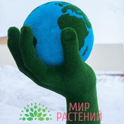 Топиарная композиция Земной шар в руке