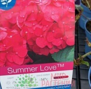 Гортензия крупнолистная Саммер Лав (Summer Love)
