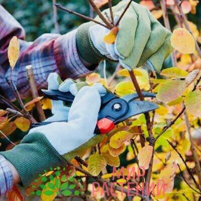 Осенняя обрезка_01